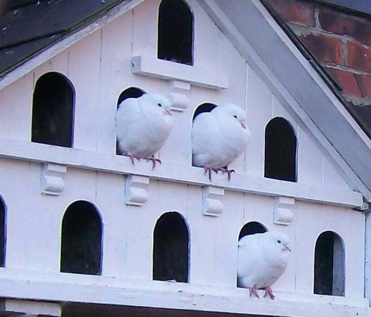 Build A Dovecote Yourself With A Construction Drawing Yes