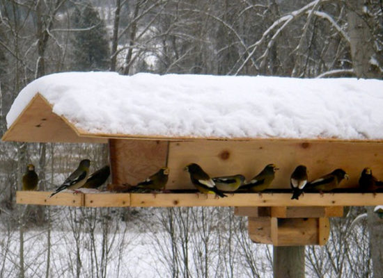 how-to-build-bird-feeder-yourself-download-woodworkingplans
